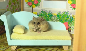 Amazingly Cute! This Little Hamster Lives In a Small Mansion.