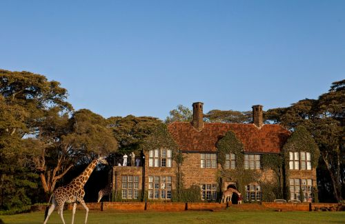 Giraffe (11)