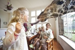 You Won't Believe That This Amazing Hotel Has Giraffes To Give You Company