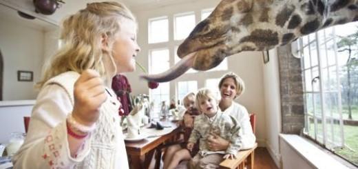 Giraffe (8)