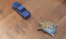 This Cute Little Tortoise Chases A Remote-Controlled Truck Around The House. Too Funny!