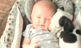 A Cute Little Puppy Goes To Sleep Next To A Cute Little Baby. Awww…