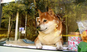 This Shop Has A Super Dog As Salesman Who Opens The Window For Customers