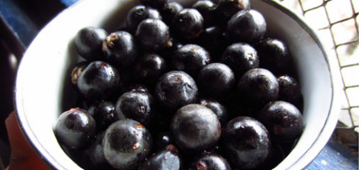 6 Health Benefits of Acai Berry