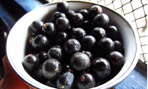 6 Health Benefits of Acai Berry
