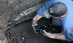 This Little Puppy Is Rescued From An Underground Pipe Using An Excavator
