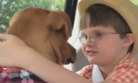 How The Pit Bull Helped Their Child. Touching Story! Watch The Video.