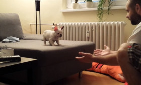 Watch this Cute Puppy!