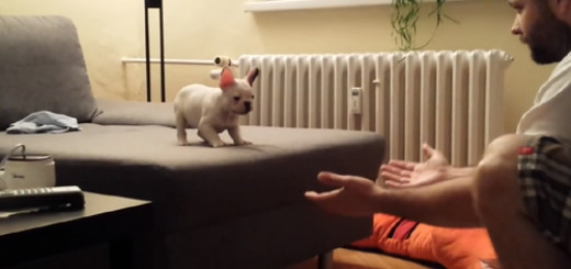 Watch This Cute Puppy Jumping Into His Owner's Hand.